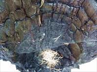 Сгоревшее дерево.