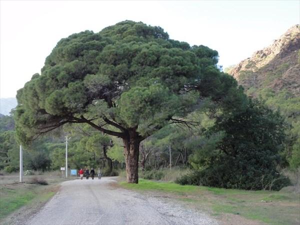 Дорога на Химеру