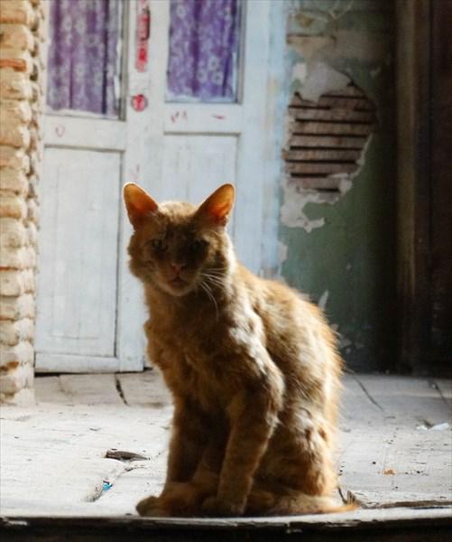 Тбилисский кот -бродяга