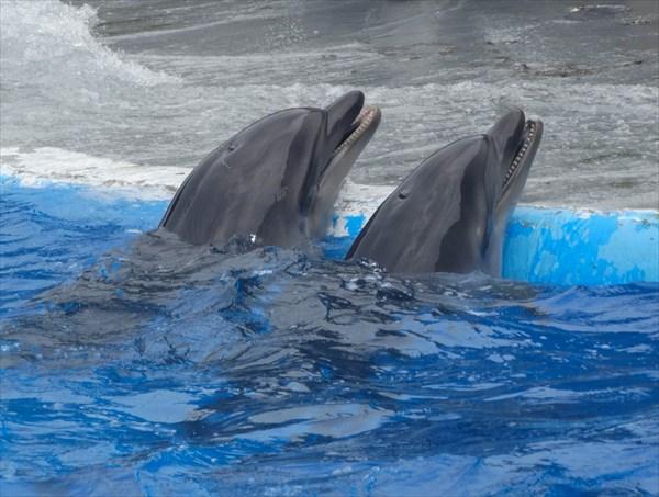 Батумский дельфинарий .