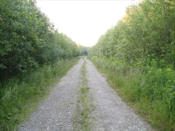 Дорога на месте узкоколейки
