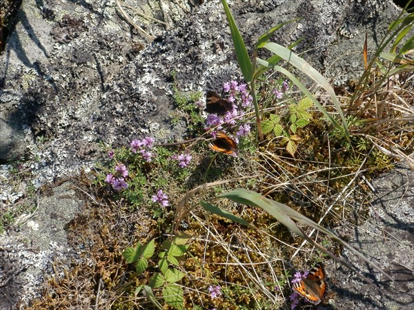 Цветочки с бабочками