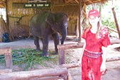Аня рядом со слоненком, которого используют для шоу.