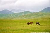 Лошади пасутся на фоне гор
