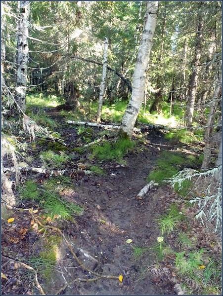 Загадочные сильно пробитые тропы в лесу 1