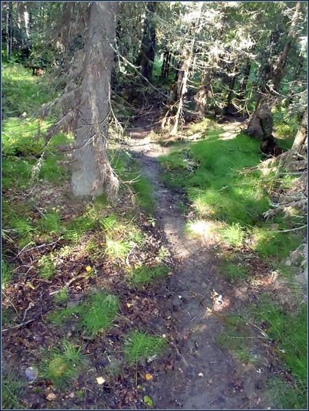 Загадочные сильно пробитые тропы в лесу 3