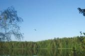 Птица над Юхором