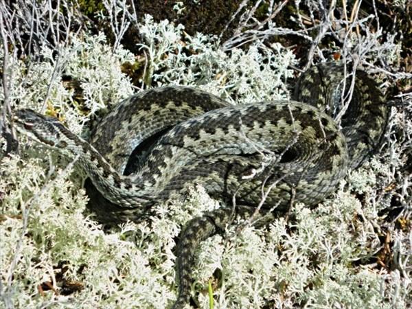 Змея вылезла на солнышко