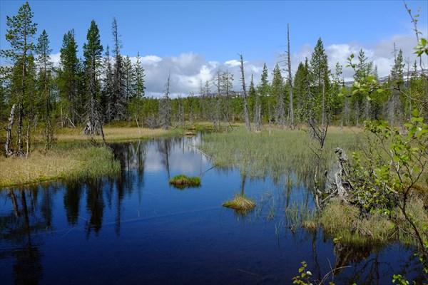 050_Весенние болота