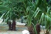 Пеликан в зоосаде