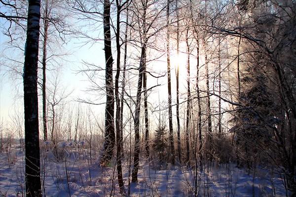 Утро в Холодном яру