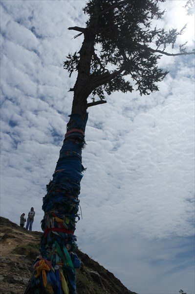 Шаманское дерево