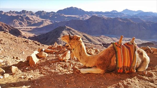 Если устал, то верблюд поможет