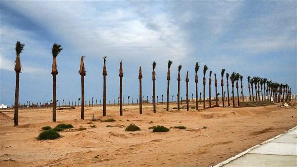 Закрывшиеся пальмы