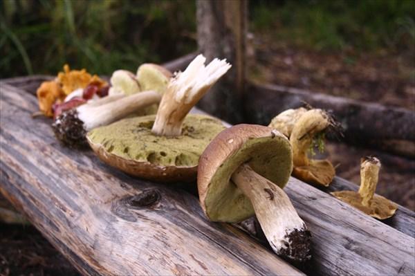 Было много грибов