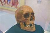Этому черепу тыща лет