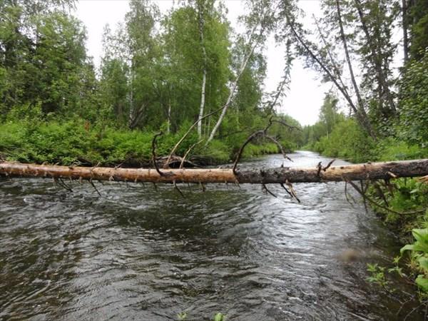 На пути упавшее дерево