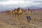 Караван верблюдов, пустыня Данакиль