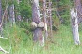 Дерево с эээ.... анатомическое