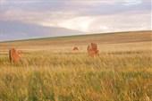 Северная Хакасия `Каменные ограды и курганы`
