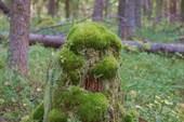 лесовичок