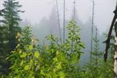 А в тайге по утрам туман...