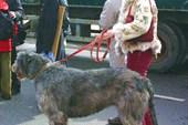 ирландская собака с хозяйкой