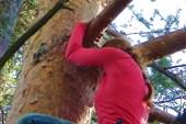 Пока Полинка сидела на дереве, читая всем желающим коды