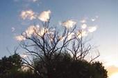 Сухое дерево с облачками