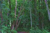 Лес возле замка