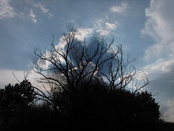 Сухое дерево и тени