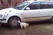 Желтое котэ))