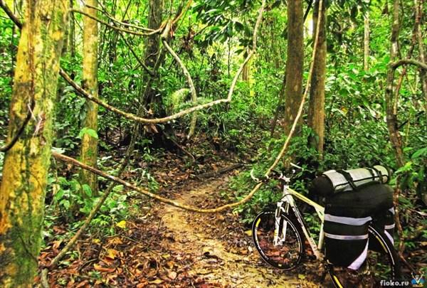 Через джунгли