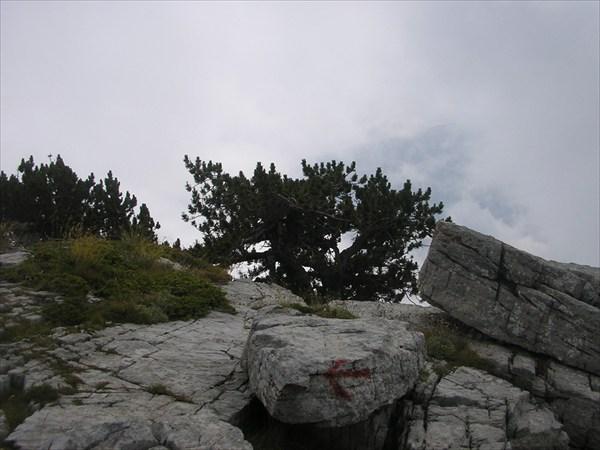 P8216576