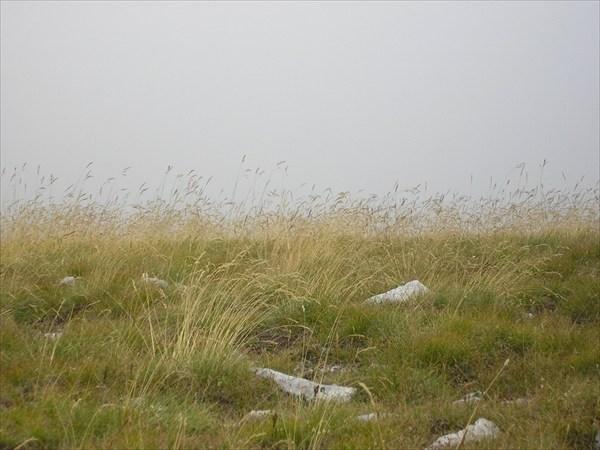 В тумане без тропы