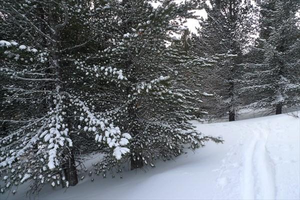 Снежные яблоки