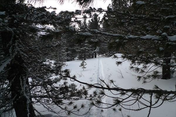 Через лес 2