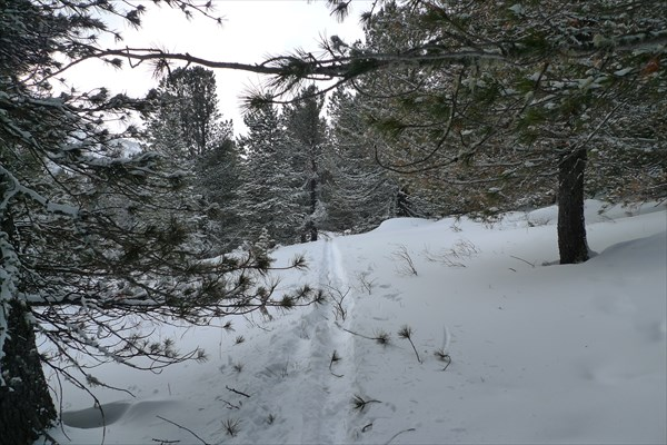 Через лес 3