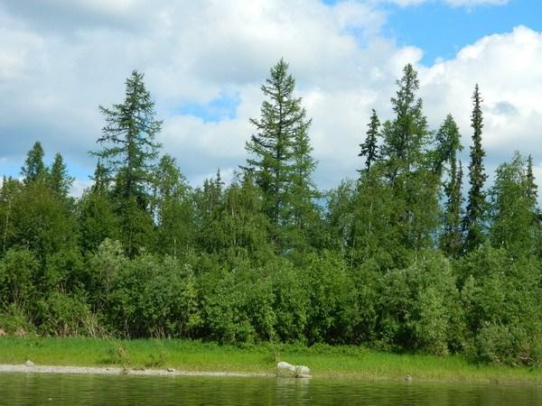 Собь, прозрачная река - зеленые берега.