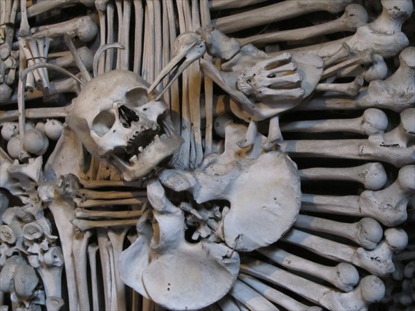 Часть герба из костей