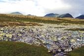 Пейзажи из заплесневелых и мшистых камней