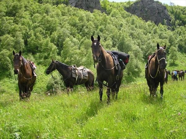 Конные туры хакасия