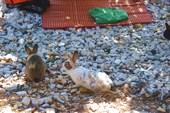 о.Видос- остров где правят кролики и фазаны
