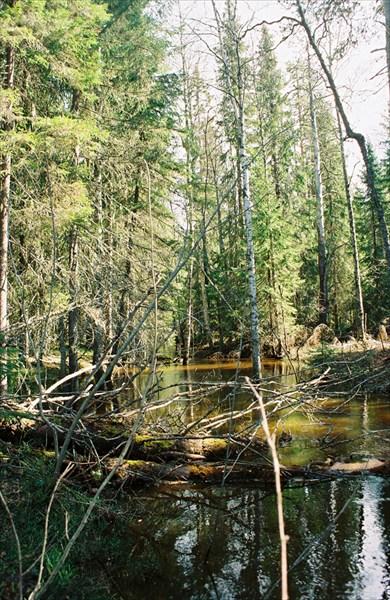 Лесной ручей Задний