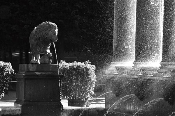 Фонтан со львами
