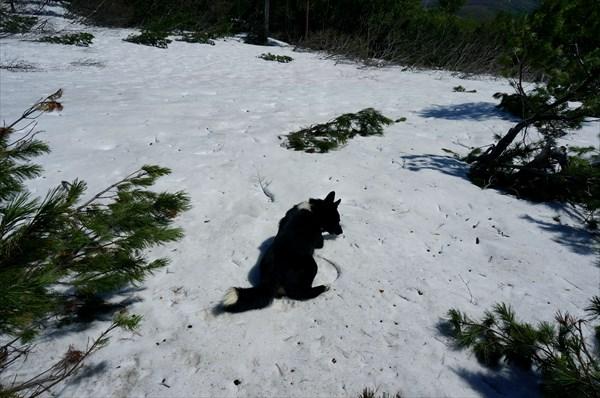 На снегу северного склона Бекчи