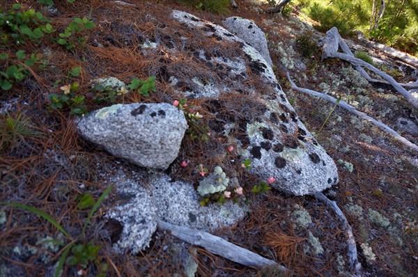 Здесь лежат камешки