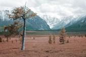 Высокогорное плато Карасу. Эту лиственницу я уже, когда то фотог