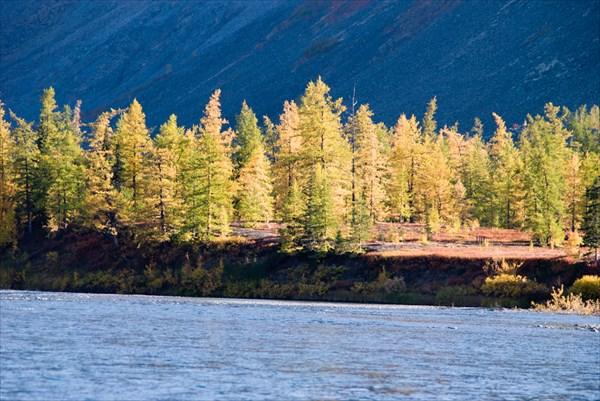 Леса на Щучьей