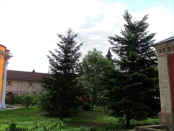035-Новоспасский-елки